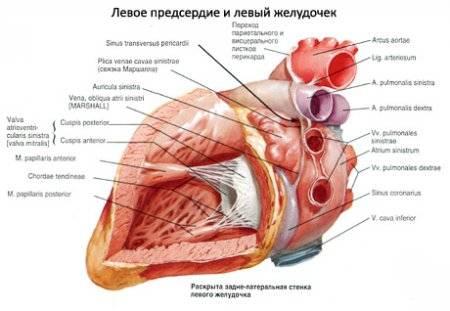 A szívnagyobbodás