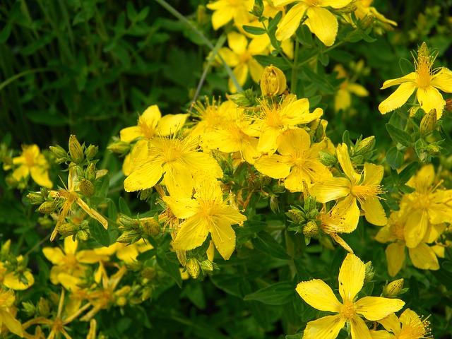 Magas nyomású fűszernövények: a legjobb ötlet áttekintése