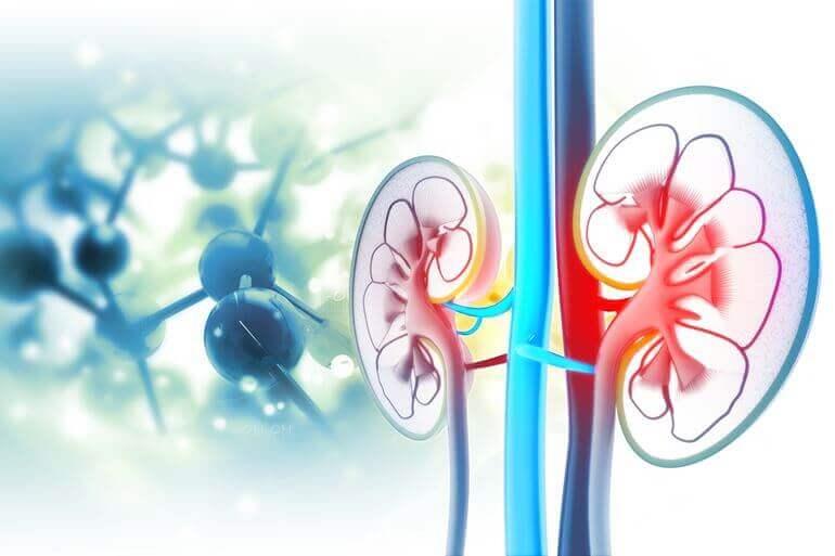 platifilin és magas vérnyomás magas vérnyomás és fejtámlák