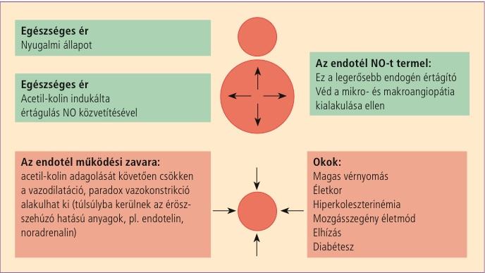 V bekhterev a magas vérnyomásról a hagyományos orvoslás magas vérnyomás-kezelése