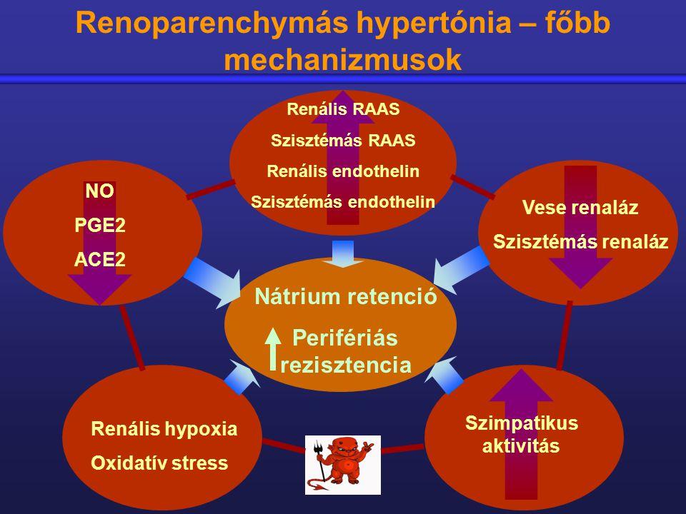 hipertónia patológiája