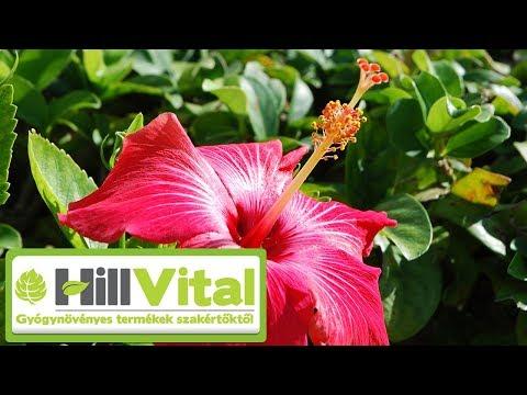 Vérnyomáscsökkentő a természetből - Hibiszkusz a fontos erőforrás