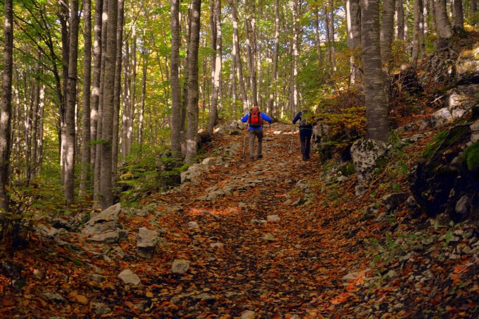Kíváncsi vagy a nordic walking egészségügyi- és fitnesz előnyeire? Íme, mi most összeszedtük neked