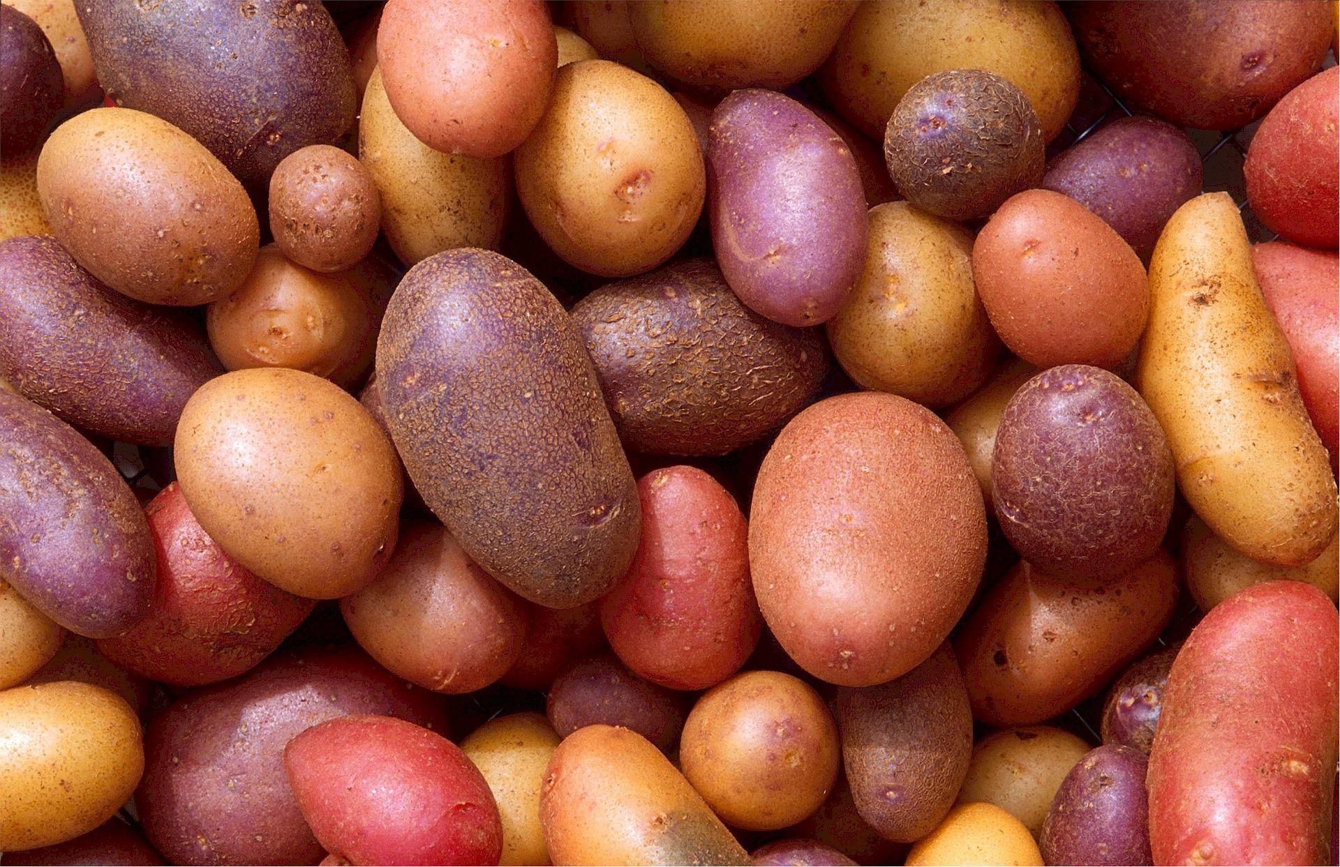 Krumpli a magas vérnyomás ellen