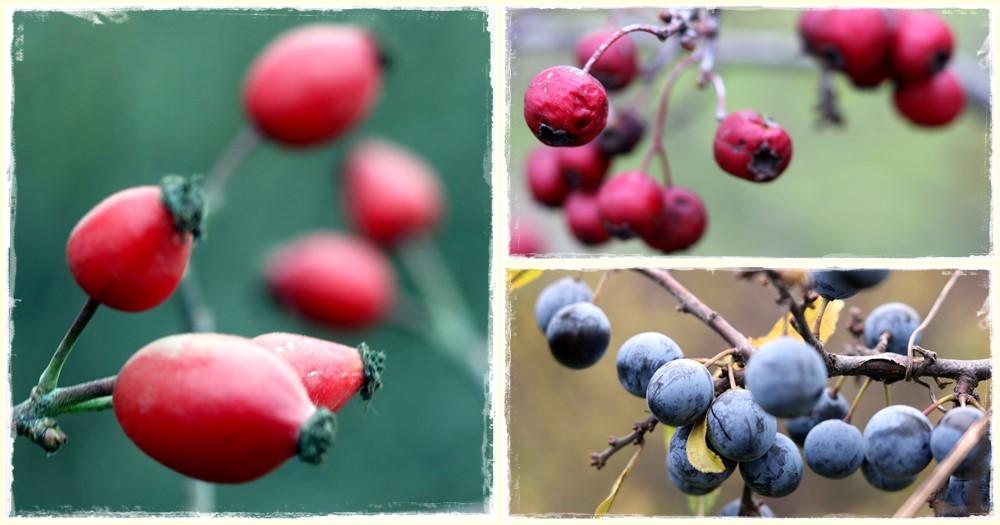Október kincsei: őszi gyógynövények
