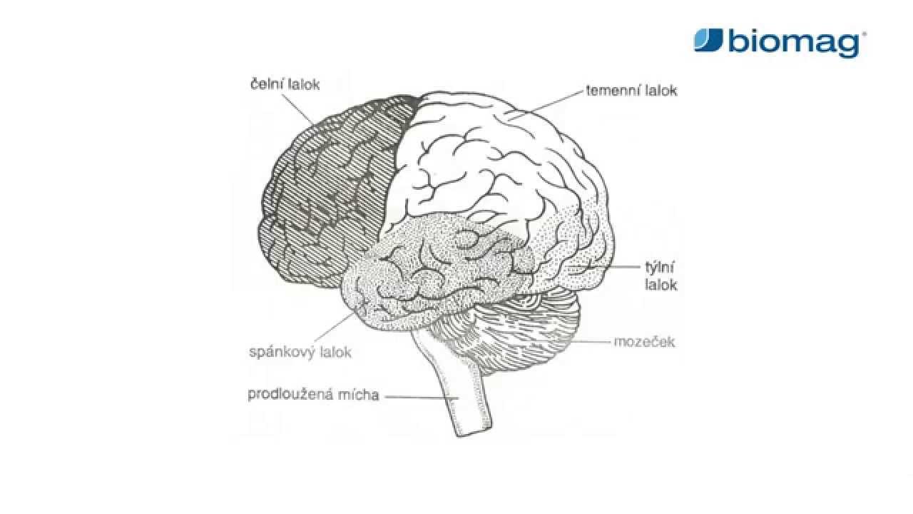 hogyan lehet kezelni az agy magas vérnyomását mi a magas vérnyomás annak okai