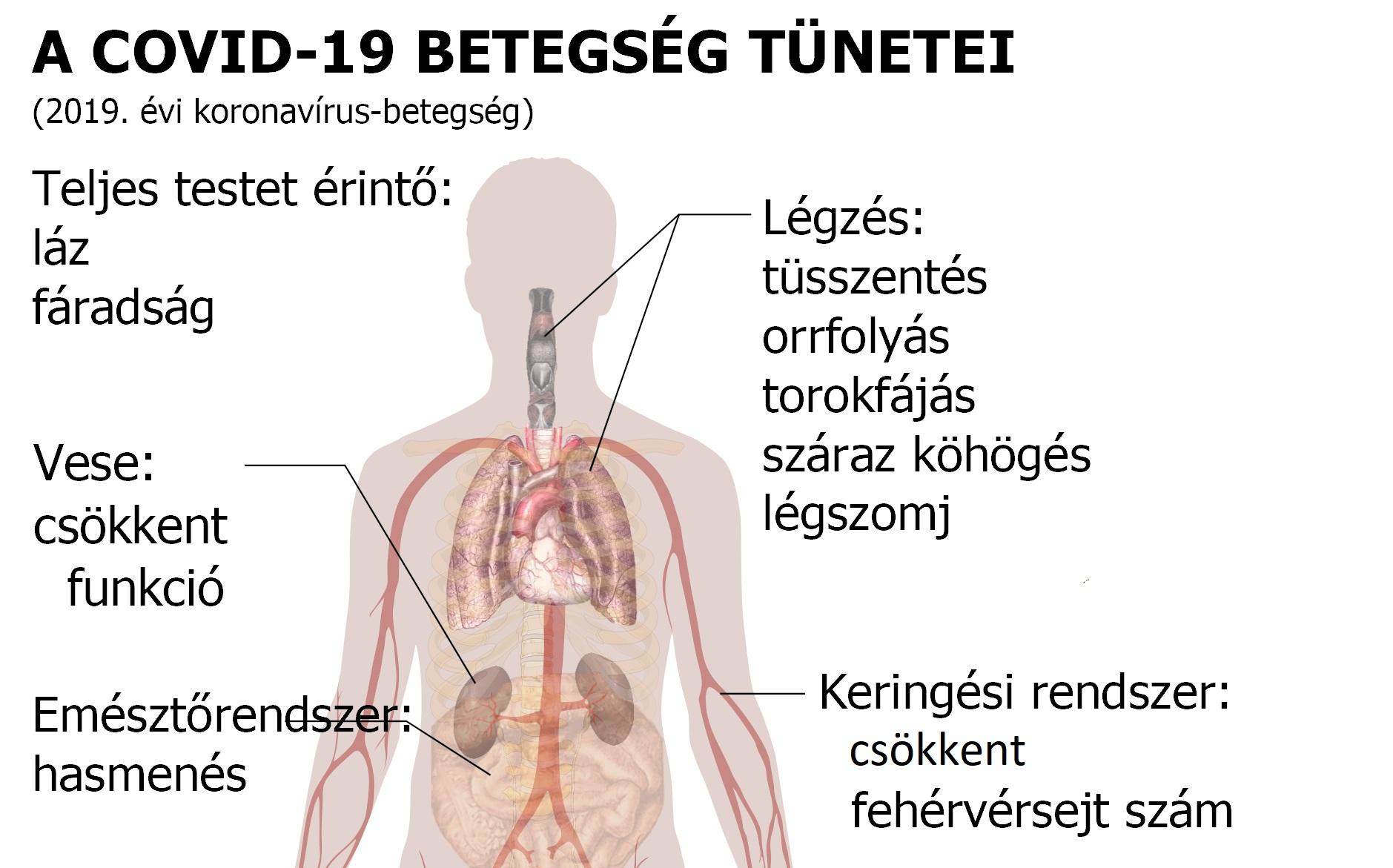 magas vérnyomás melyik szerv érintett