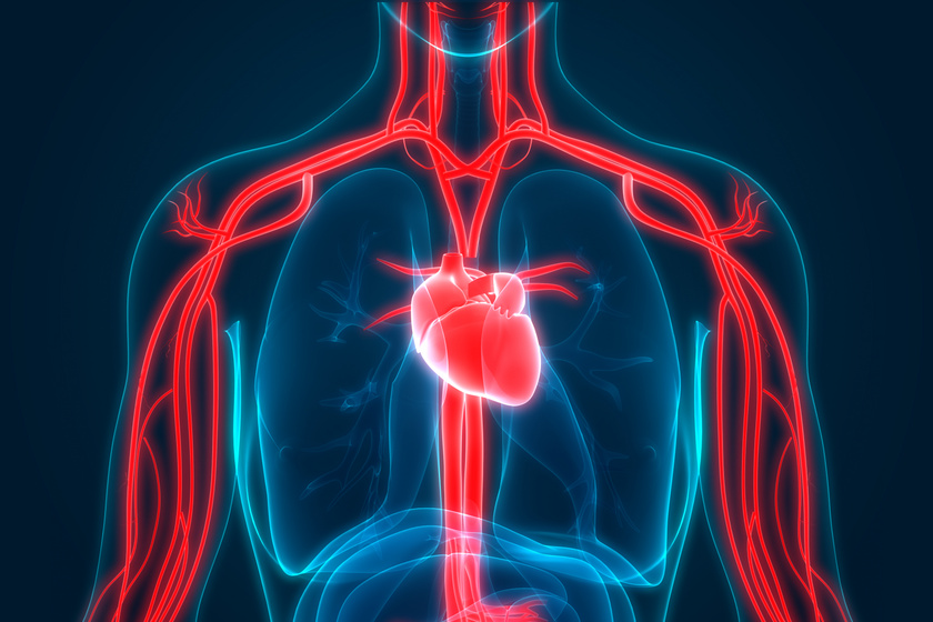 magas vérnyomású agyi erek