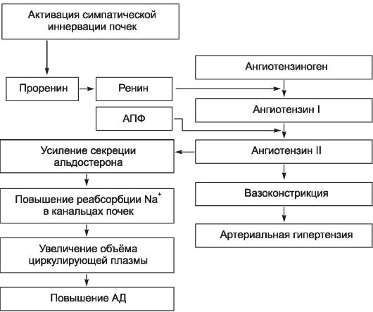Mi az artériás hipertóniás 3. fokozat? - Tachycardia